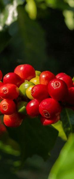 berries600